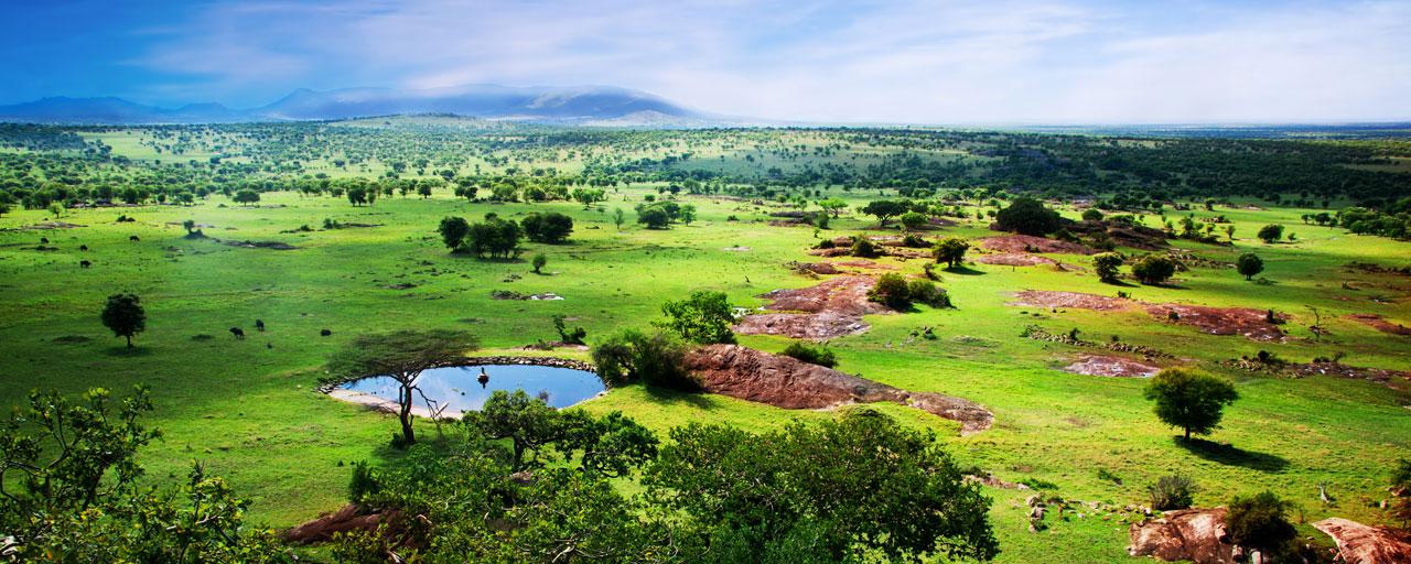 Quand Partir En Safari Afrique La Saison Verte