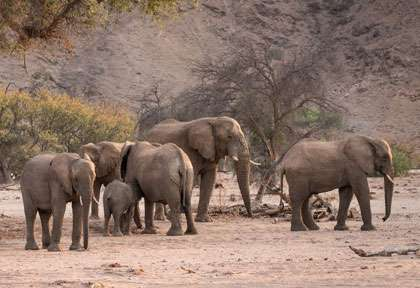 Elephants du Damaraland